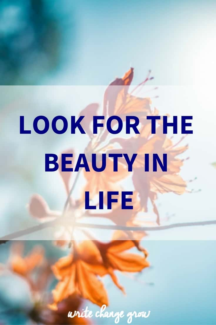 Beauty is everywhere, we just have to make sure we look.