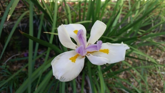 Beauty and Joy - Garden